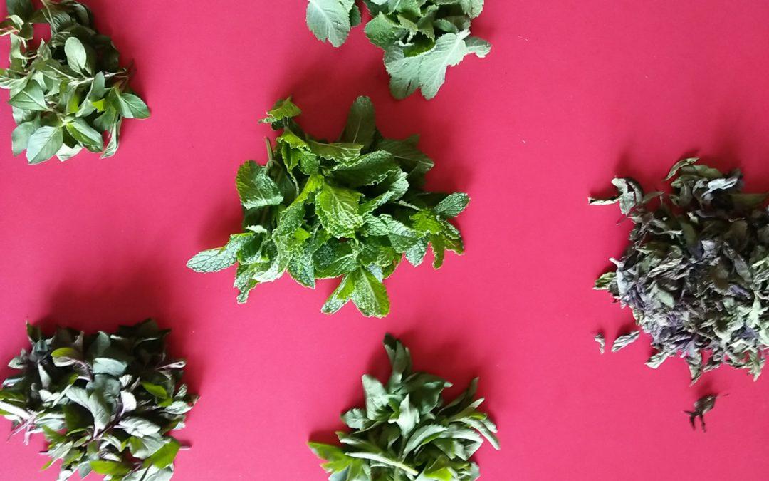 Fresh herbal tea, Mints and Stevia