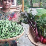 Bean Radish Red Beet Harvest TEE, permaculture