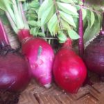 Red Beet and Radish, permaculture