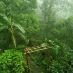 Mystic lash green garden in rain