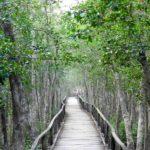 Sundarban Mangroven Forest