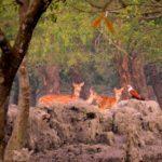 Bandarban, world's largest mangrove forest