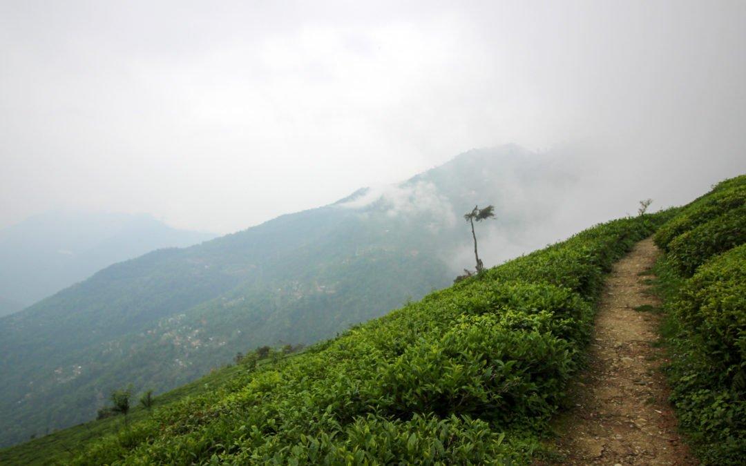 Darjeeling, Toy Train und Teeplantagen, meine Indien Reise